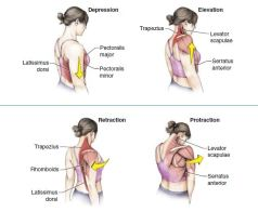 movements-in-shoulder